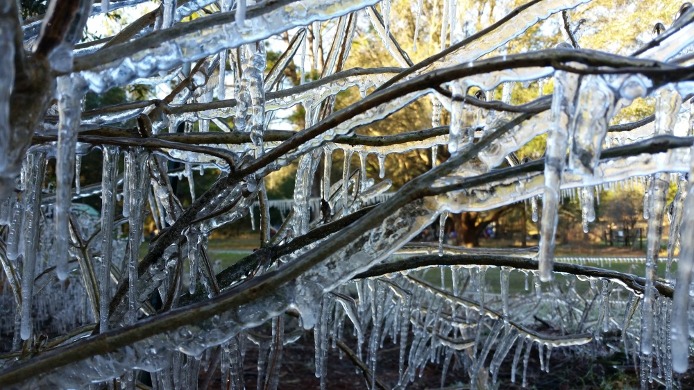 icicles4