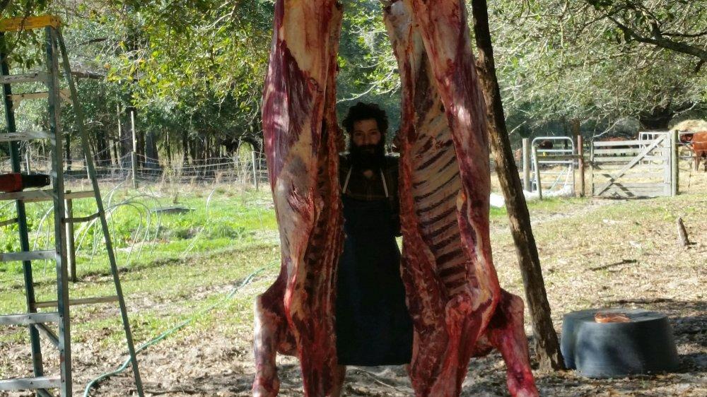 Beef harvest