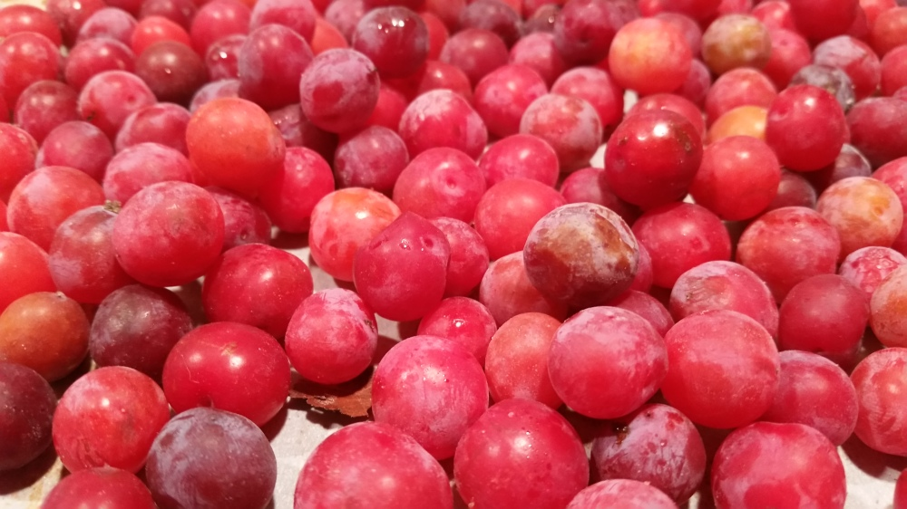 drying wild plums