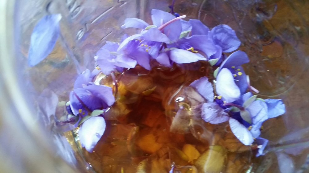 Spiderwort Soda 4