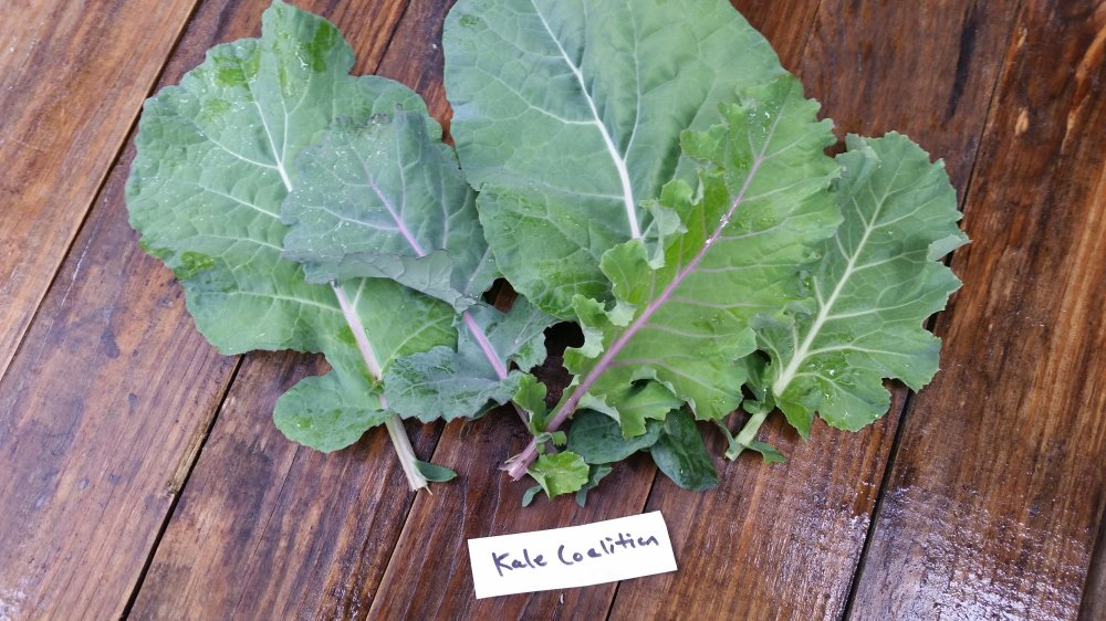 Kale Coalition Kale