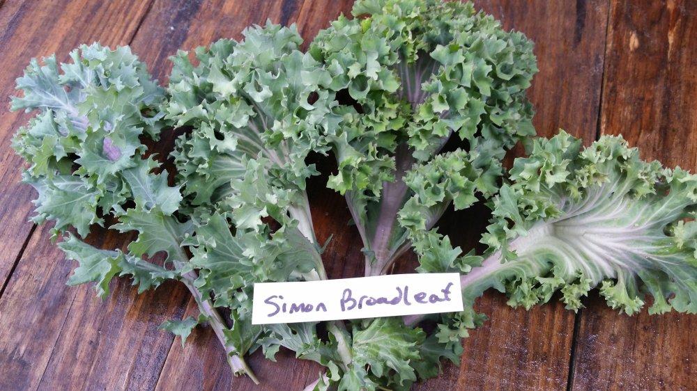 Simon Broadleaf kale