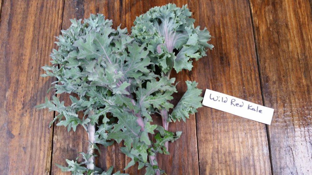 Wild Red Kale
