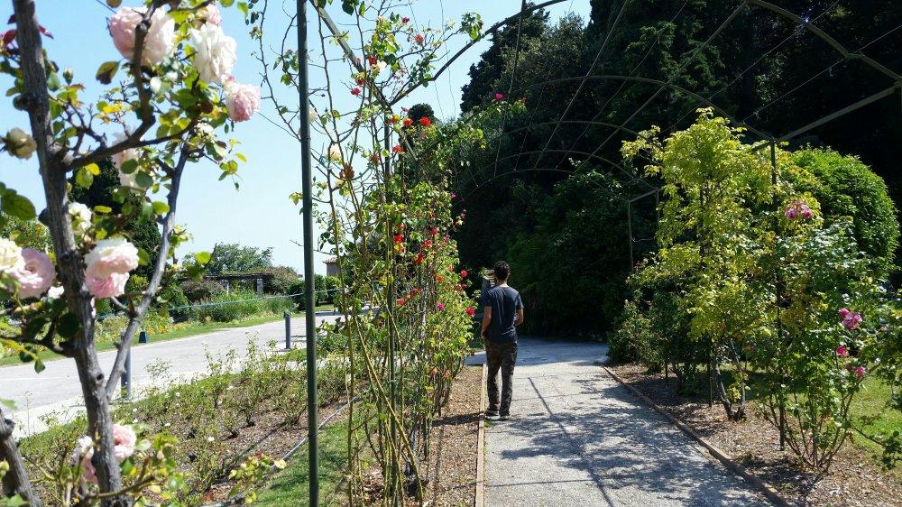 Monastary Garden 3
