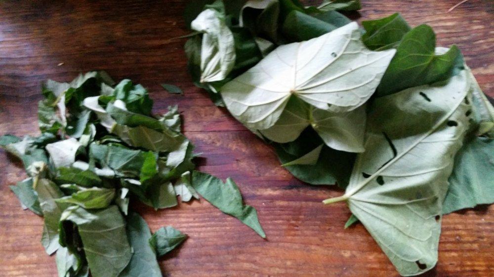 Sweet potato leaves