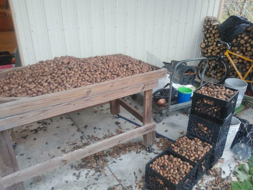 Pecan sheller