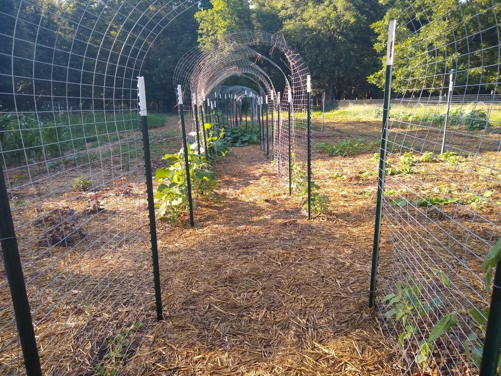 The brag garden 5