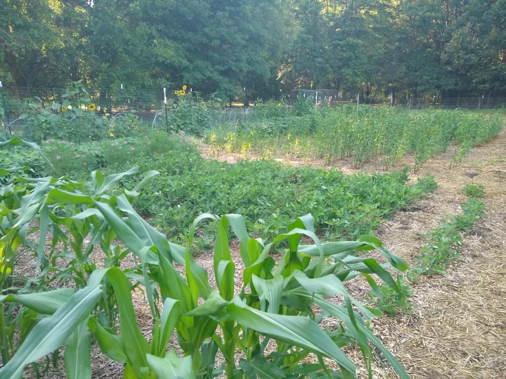 The brag garden 9