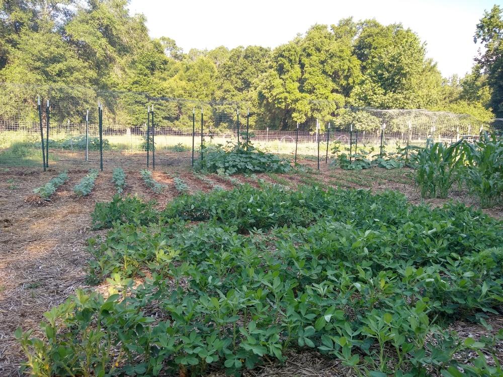 The brag garden 13