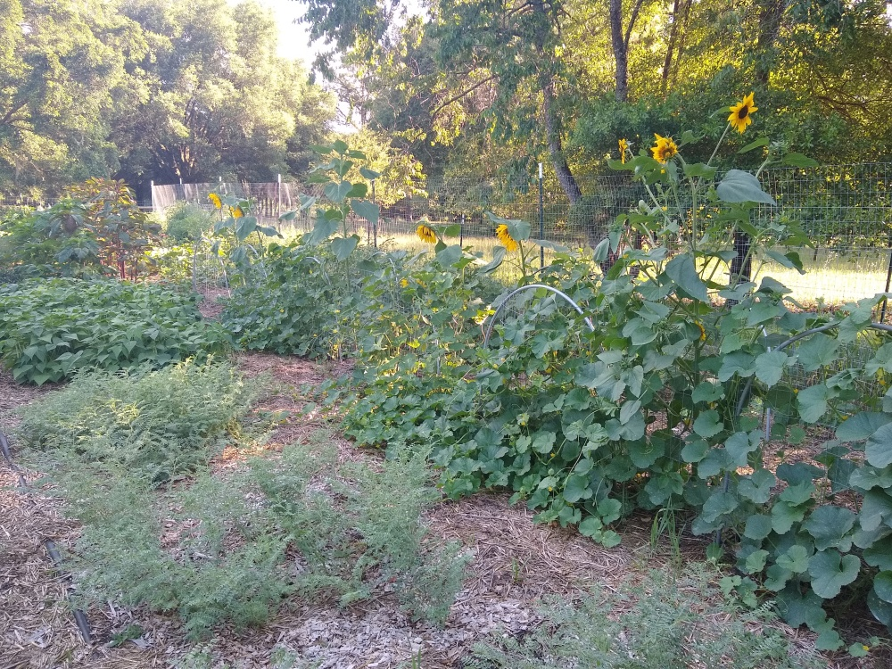 Melons and sunflowers