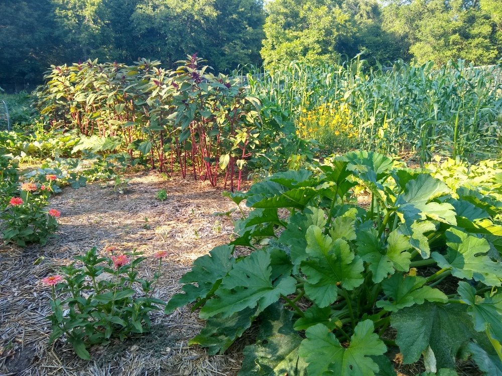 The brag garden 26