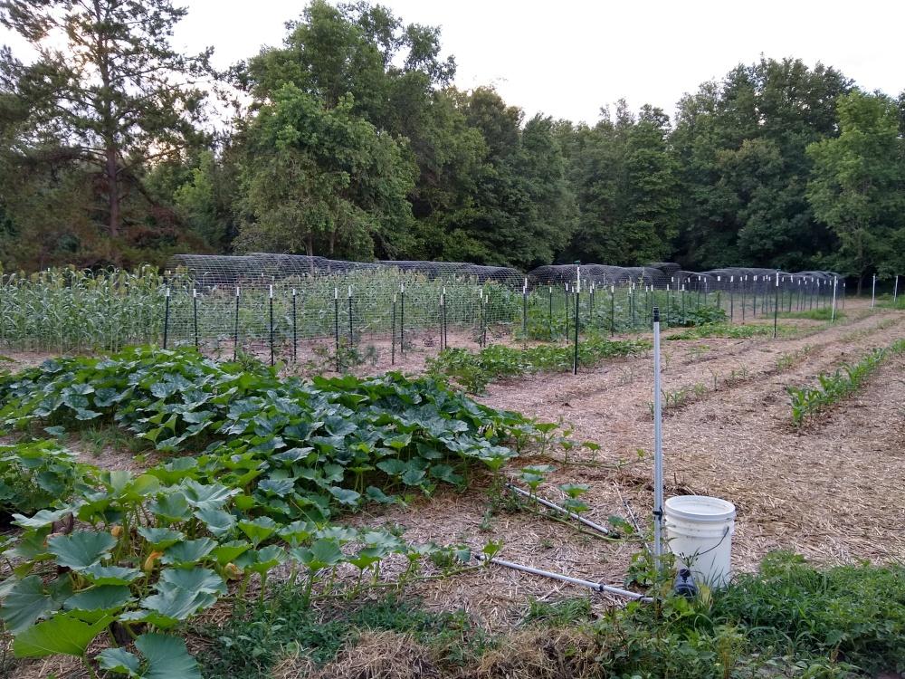 The brag garden 30
