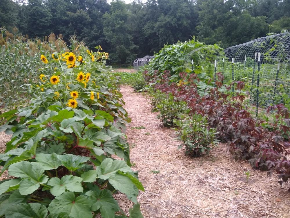 The brag garden 38