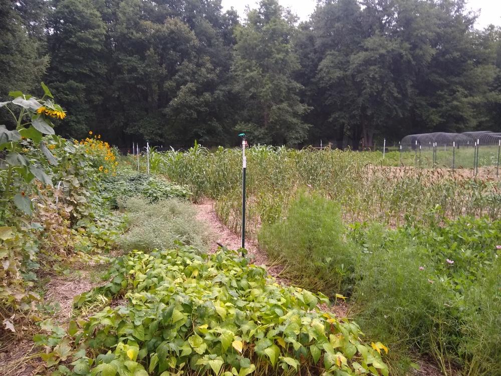 The brag garden 50