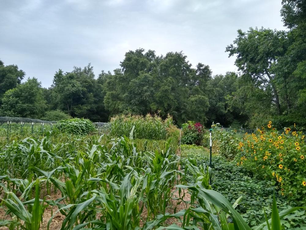 THe brag garden 59